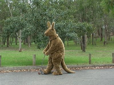 http://www.kookaburragame.com/kangaroo_costume/kangarooCostume062.jpg